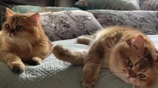 Эмоциональность и интеллект кошек или только инстинкты?