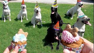 PUPPIES' FIRST BIRTHDAY PARTY!! (FAMILY REUNION OF 8)