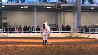 Лошади терской породы.
