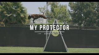 BOXER DOG: BEST DOG PROTECTOR (Tommy And Cid)