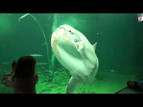 Nordsøen Oceanarium er Nordeuropas største akvarium