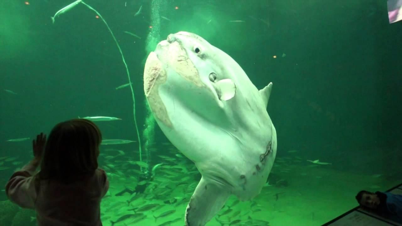 hirtshals akvarium