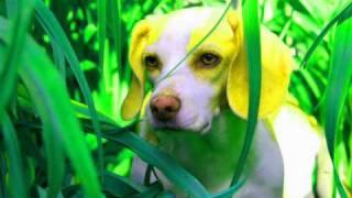 Matthew Dear - Dog Days