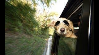 Как перевозить животных в авто