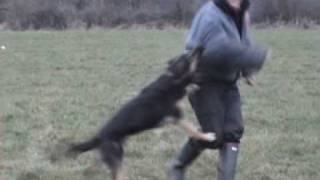 K9 Xena Personal Protection Dog