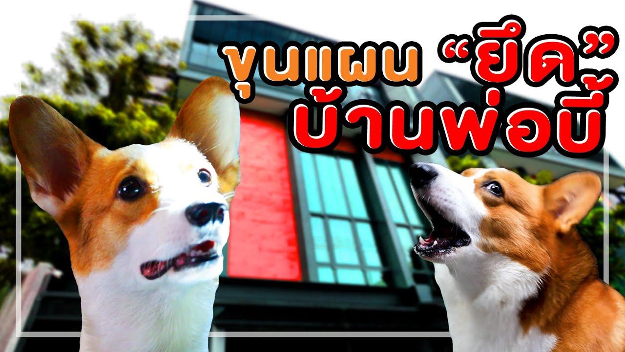 หมาพี่บี้ เดอะ ซีรีส์ ตอน แอบพ่อเข้าบ้าน!! (เมื่อพี่บี้ไม่อยู่)