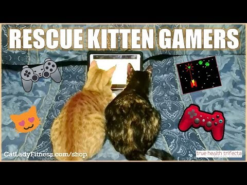 Smart kittens play COMPUTER Games! - Gamer Kitties / Cat Lady Fitness