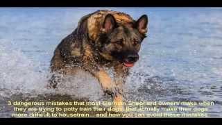 German Shepherd Rescue Houston Video