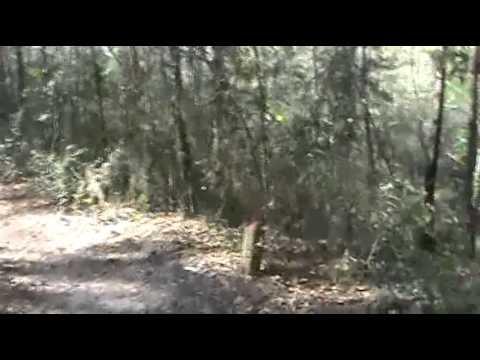 Jacksonville Arboretum and Gardens Hike