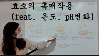 효소의 촉매작용(feat. pH, 온도)