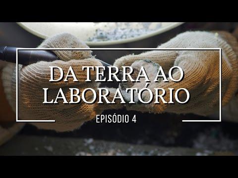 Da terra ao laboratório: Dinossauros #4