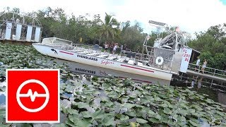 Wydymka Z Aligatorem - Everglades Safari Park