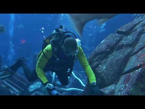 Lost Chambers Aquarium im Atlantis, The Palm in Dubai (4K)