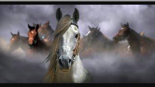 Клип про самую быструю лошадь