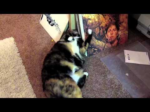 Pepper loves vinyl.