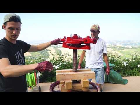 MAKING WINE IN ITALY! The Whole Process