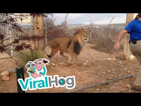 Thumbnail: The Lion is Gonna Get You