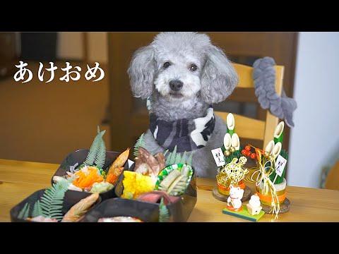 ?愛犬に手作りおせちを作って振る舞ってみた。新年あけましておめでとうございます。【トイプードル】