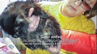Спасение безлапого кота Находка  которая шокировала ВЕТЕРИНАРИЯ  A disabled cat needs help