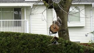 Squirrel Proof Bird Feeder - Funny