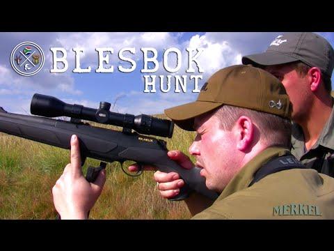 Blesbok ( Damaliscus Dorcas Phillipsi) Hunt Süd Afrika - Huntessential Wakkerstroom