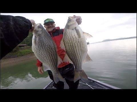 One Of My Funnest Days Fishing! -- Hybrid Bass Mayhem