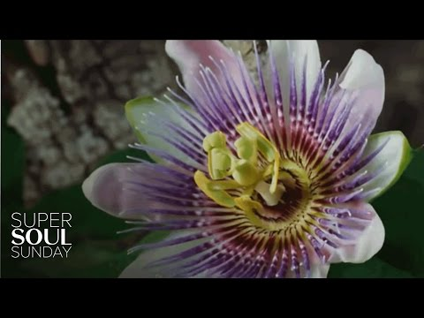 """The Beauty of Pollination"" 