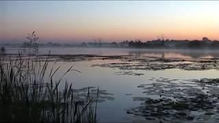 Утро на рыбалке(Утро на рыбалке ЛОВЛЯ КАРАСЯ НА УДОЧКУ СЕКРЕТЫ ЛОВЛИ. Поклевка крупной рыбы или утро на рыбалке Ловля круп..., 2016-04-03T16:12:34.000Z)