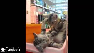 Repeat youtube video Cute Kitten Massage Therapy