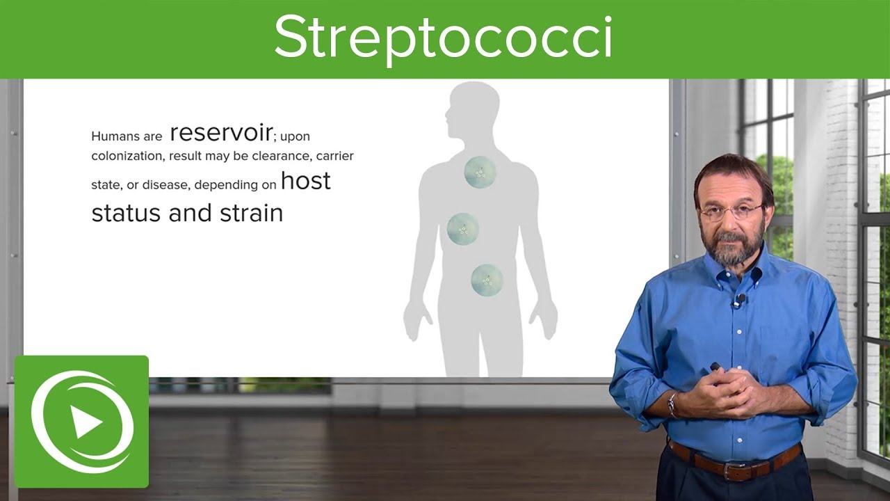 Streptococci – Microbiology | Lecturio
