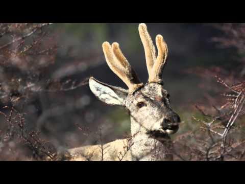 ¡PARTIDAS ÉPICAS CON EL NUEVO MAZO META! NOBLE + PRINCIPE   Malcaide Clash Royale from YouTube · Duration:  20 minutes 57 seconds