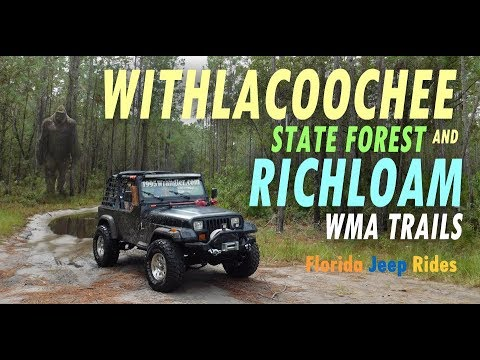 Green Jeep Wrangler >> Withlacoochee State Forest and Richloam WMA Trails Florida Jeep Rides - YouTube