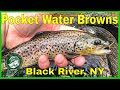 Black River NY - Euro Nymphing Pocket Water Brown Trout in the Adirondacks