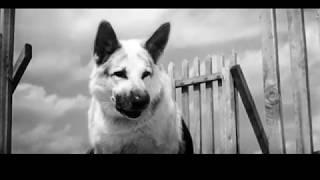 Ко мне, Мухтар (часть 5) Советский художественный фильм
