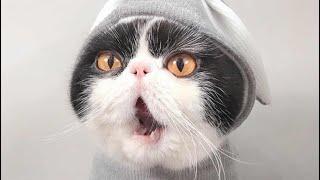 Самый смешные видео в мире кошки 2020 лучшие приколы животных 2020