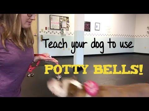 potty-bells--training-tips-tuesdays