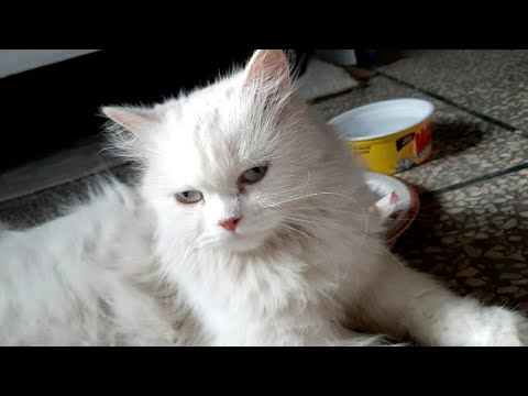 So Cute Cat❤ Best Funny Cats Videos 2020  Cute Baby Kittens Videos 2020
