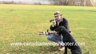 Hunting Retriever Training, Hunting Dogs, Double Retrieve