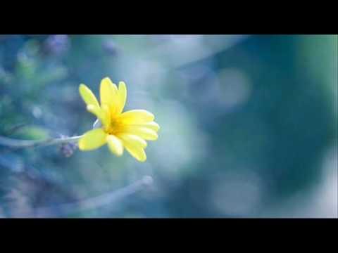 A. Vivaldi: Il Gardellino, Op. 10 n. 3 - Concerto for flute, strings & b.c. in D major (RV 428) - I