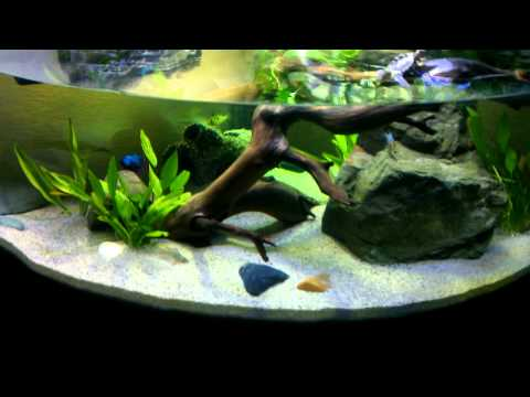 My Final Aquatic Turtle Tank/ Habitat Setup featuring 2 Northern Black ...
