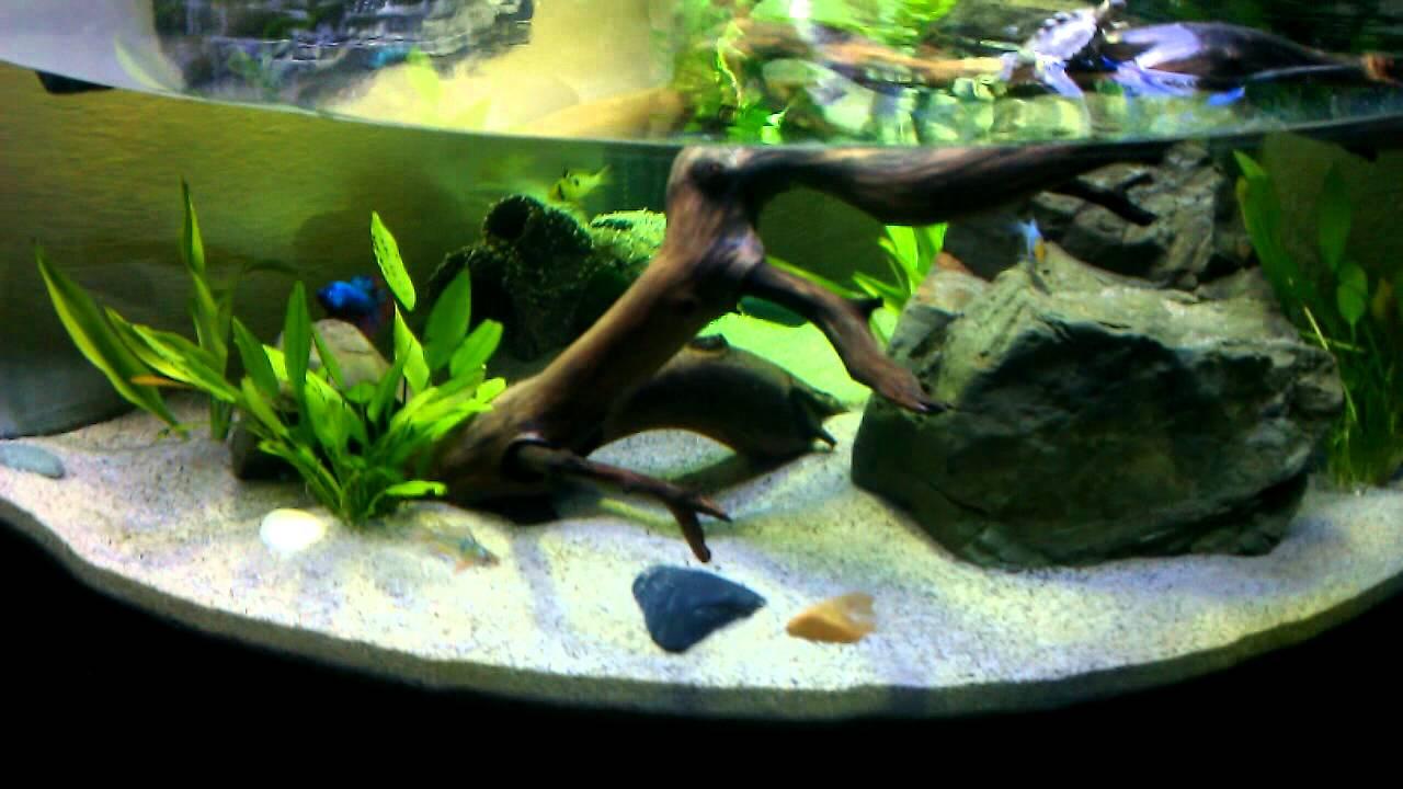 My Final Aquatic Turtle Tank/ Habitat Setup featuring 2 Northern Black-Knobbed Map Hatchlings ...