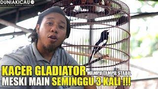 #VLOGKACER : RAHASIA KACER GLADIATOR MAMPU MAIN 3 KALI SEMINGGU !!!