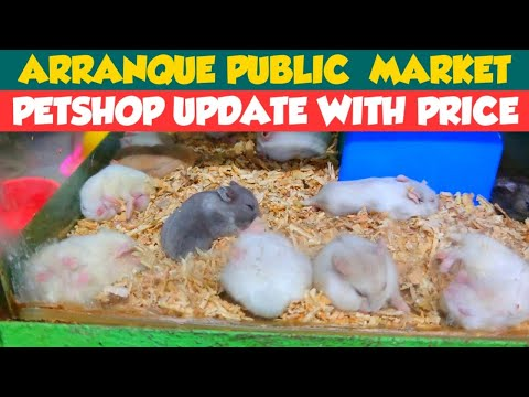 MANILA UPDATE | ARRANQUE PETSHOP UPDATE WITH PRICE! | ARRANQUE PUBLIC  MARKET