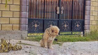 Owner Abandoned his Dog on the Street After Selling House