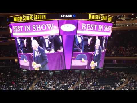 Westminster kennel club dog show BEST IN SHOW 2016