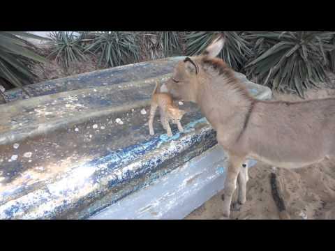 kitten and donkey