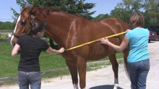 How To Measure For A Horse Blanket