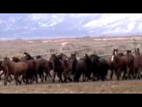 Wild Horse Adoption - Curse in The Weeds - Music By Horsefeathers