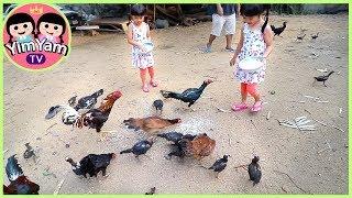 หนูยิ้มหนูแย้ม   ให้อาหารไก่