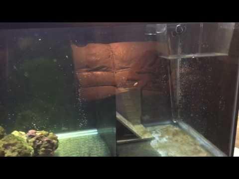 How To Start Breeding Clownfish
